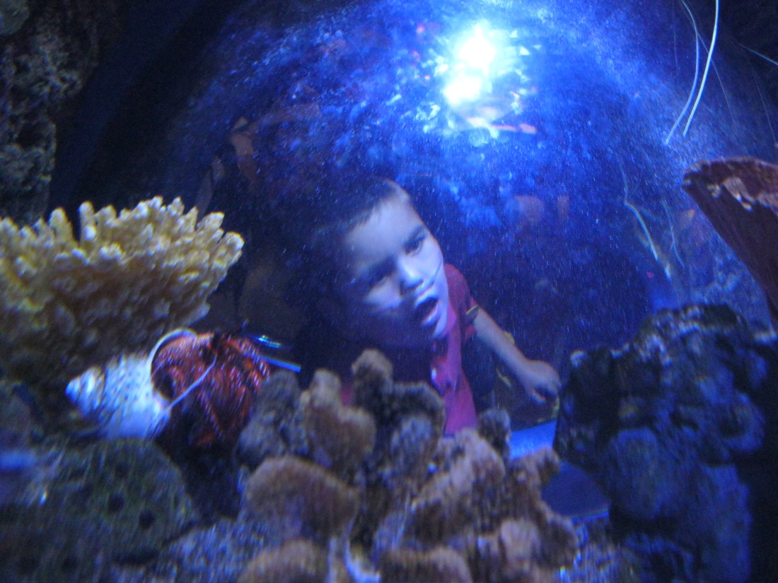 Rudy was fascinated by the fish in the aquarium!
